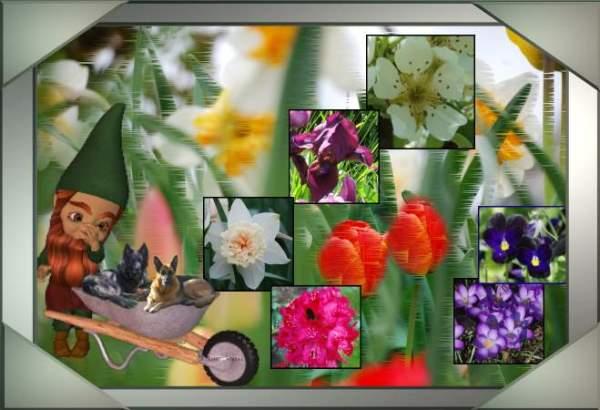 An den Beitrag angehängtes Bild: http://www.gartenwichtel-gisela.de/images/imag2012/Titel_Fruej_2012.jpg